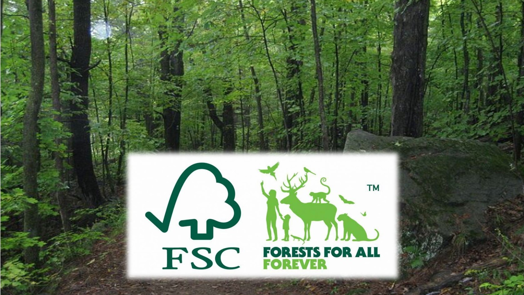 There are the reasons why FSC label becomes important for people and forest